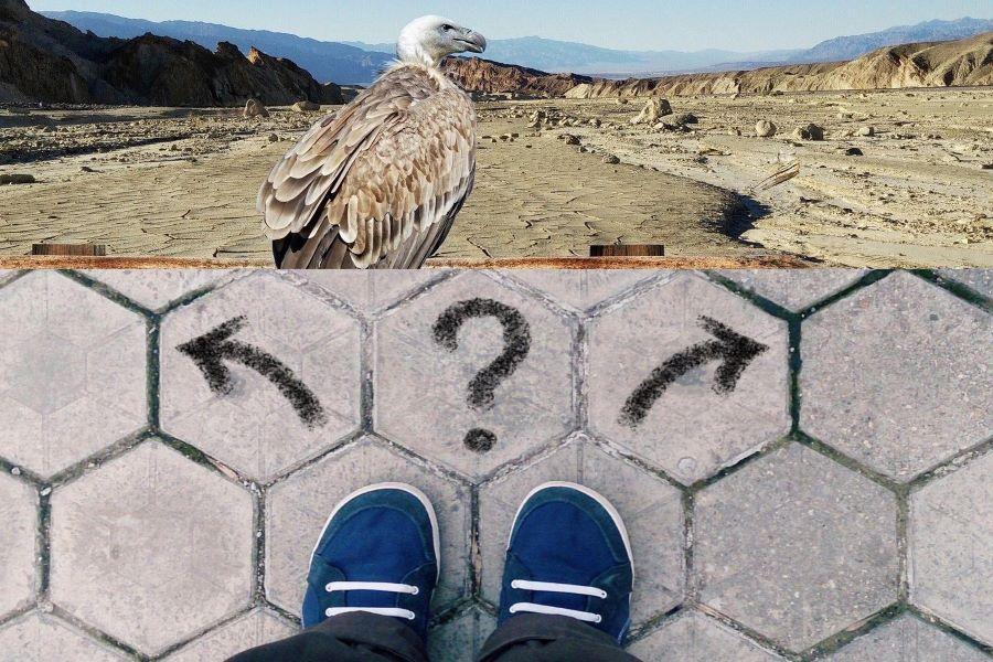 condor_nel_deserto